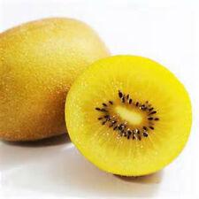 Rare Golden Kiwi Fruit ! 10 Seeds! Hardy Zone 7-11! SWEET TASTE! COMB. S/H!