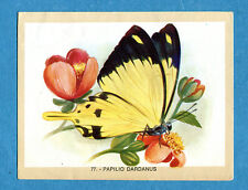 NATURAMA - Lampo 1968 - Figurina-Sticker n. 77 - PAPILIO DARDANUS -Rec