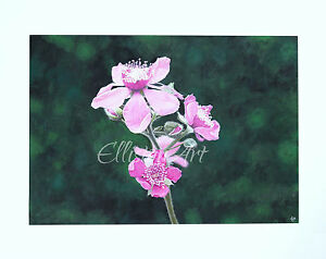 Original Yorkshire Wild Rose Watercolour Flower floral Pretty in Pink Painting