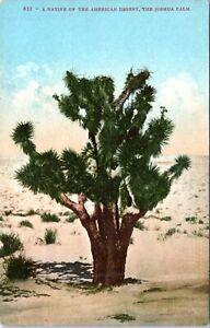 1910 Joshua Palm Desert Tree Yucca Cactus Postcard HC