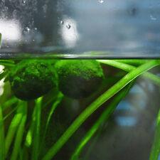 Boules Marimo Moss Cladophora vivre aquarium usine poisson réservoir crevettes