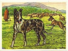 1952 Dog Art Print Austria Tobacco Bildwerk Company Card SMOOTH COATED COLLIE