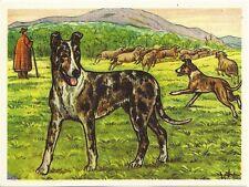1952 Dog Art Print Austria Tobacco Bildwerk Company Card Smooth Coated Collie