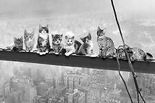 Blechschild Katzen Skyline von New York Metallschild 20x30 cm Wanddeko tin sign