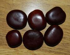 5 Entada rheedii  Seeds, African Dream Herb beans, Fresh For Germination