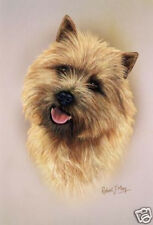 Robert J. May Head Study - Cairn Terrier (Rmdh035)