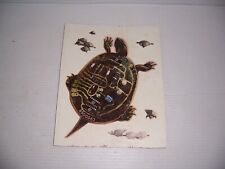Vintage Sticker Print on cardboard of a Turtle with a Circuit Board on its Shell
