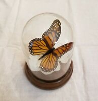 monarch butterfly glass home decor