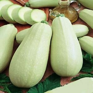 Seeds Zucchini Courgette Squash White Vegetable Plant Organic Heirloom Ukraine