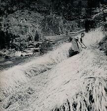 VALTOURNENCHE c. 1950 - Seigle Coupé à la Faucille Alpes Italie - DIV 3442