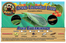 Green Lacewing Eggs on Hanging Card- 5000 Count Lacewings