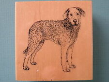 Realistic Chesapeake Bay Retriever Dog Stamp Gallery Rubber Stamp