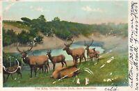 Elk Herd Golden Gate Park San Francisco California 1909 Postcard