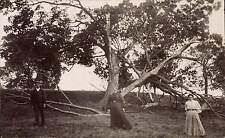 Bedale posted & addressed Tree Struck by Lightning.