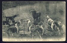 Carte Postale Ancienne FRANCE CHASSE à Courre Hunting Jagd CHIENS DOGS CERF DEER