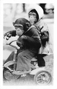 Chimpanzees Dressed Up On Tricycle Monkeys Cute Funny RPPC Vintage 1955 Postcard