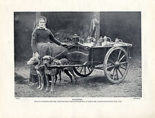 FLEMISH LADY DOGS HARNESSED TO MILK CART OLD ORIGINAL DOG PRINT PAGE FROM 1934