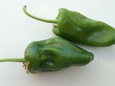 VEGETABLE  HOT CHILLI PEPPER PADRON  60 FINEST SEEDS