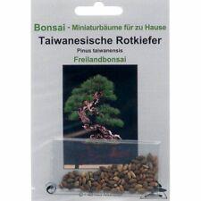 Bonsaï - 40 Graines Pinus Taiwanensis Pin Rouge de Taiwan 90036