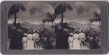 Éruption volcanique Montagne Pelée 1902 Martinique France Photo Stereo Vintage
