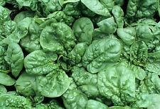 Spinach (Bloomsdale Dark Green) Garden Vegetable seeds–1/2 oz(Approx.300+ seeds)