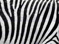 ABSTRACT ZEBRA PATTERN BLACK WHITE STRIPE POSTER ART PRINT 30X40 CM BB2916B