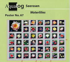 AQUALOG Poster Most Beautiful Waterlilies, LAMINATED