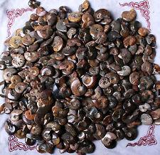 Wholesale Price! 2.2lb/90pcs+ Rainbow/striated Mixed Ammonite Fossil Specimen