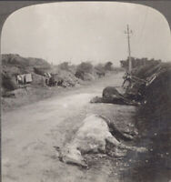 WW1. War Horse. Horses Killed by German Marmite Shell Explosion, Dugouts on Left