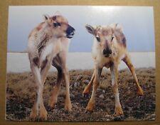 Ansichtskarte Klappkarte Karibu Caribou - Post Kanada