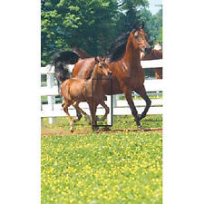 Ideastix/SwitchStix Switchplate cover ST Mare and Foal
