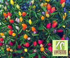Chilli Pimienta-Crepúsculo-medio! novedad!! 10 semillas-liveseeds -