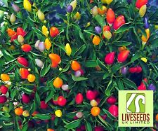 Chilli Pepper - Twilight - Medium HOT ! 10 seeds - Liveseeds -