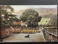 Cumbria: Silverhow, Grasmere c1905 showing sheep herd, dog & herder