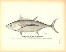 Rare 1884 Antique Fish Print ~ The Albacore