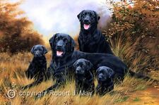 Original Black Labrador Painting by Robert J. May