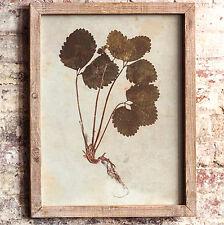 Vintage Inspired Framed Botanical Print #2