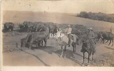 Iowa Ia RPPC Postcard 1916 ADAIR Cowboys Cattle Farm Horse Chicago Junction Ohio