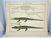 Antique large hand-colored print 1843.Oken's Naturgeschichte Plate 67 Crocodile