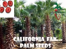 25 California Fan Palm seeds, ( Washingtonia Filifera ) from Hand Picked