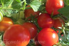 10 graines de tomate MIRACLE de BALCON généreuse précoce..jardin terrasse super!