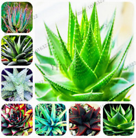 100 PCS Seeds Aloe Vera Vegetables Plants Edible Cosmetic Bonsai Garden Rare New