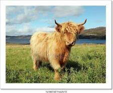 Close Up Of Scottish Highland Cow In Field Art Print Home Decor Wall Art Poster