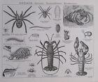 Spinnen Tausendfüßer Krustentiere Würmer 2 Drucke Faksimile Druck Print
