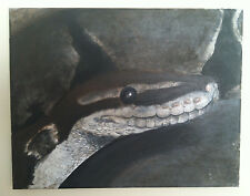 Original Ball Python Snake Reptile Stretched Canvas Painting Wall Art 11 x14