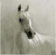 CHENPAT37 animal 100% hand-painted white horse oil painting home art on canvas