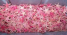 SMALL RED STARFISH  STAR FISH SEASHELLS CRAFTS 100+ PC