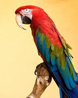 """perfect 24x36 oil painting handpainted on canvas """" a beautiful parrot""""1671"""