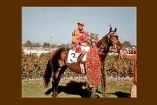 NEEDLES - USA 1956 Kentucky Derby winner modern Digital Photo Postcard
