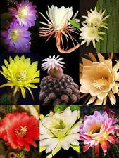 Night Blooming Cactus Mix, rare garden cacti exotic desert succulent 100 seeds
